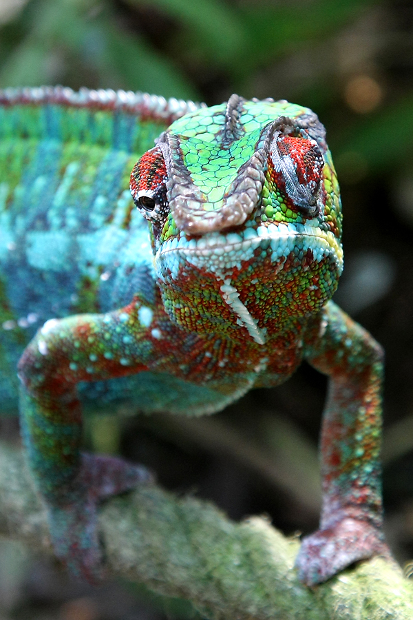 IMAGE: http://www.michaelangstphotography.ch/wp-content/uploads/2011/04/Zoo-Z%C3%BCrich-12.jpg