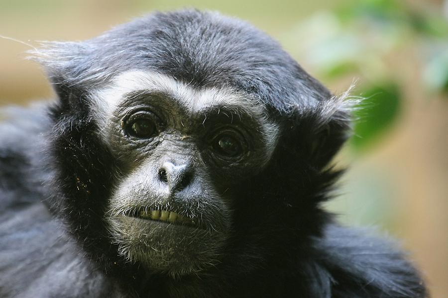 IMAGE: http://www.michaelangstphotography.ch/wp-content/uploads/2011/04/Zoo-Z%C3%BCrich-7.jpg