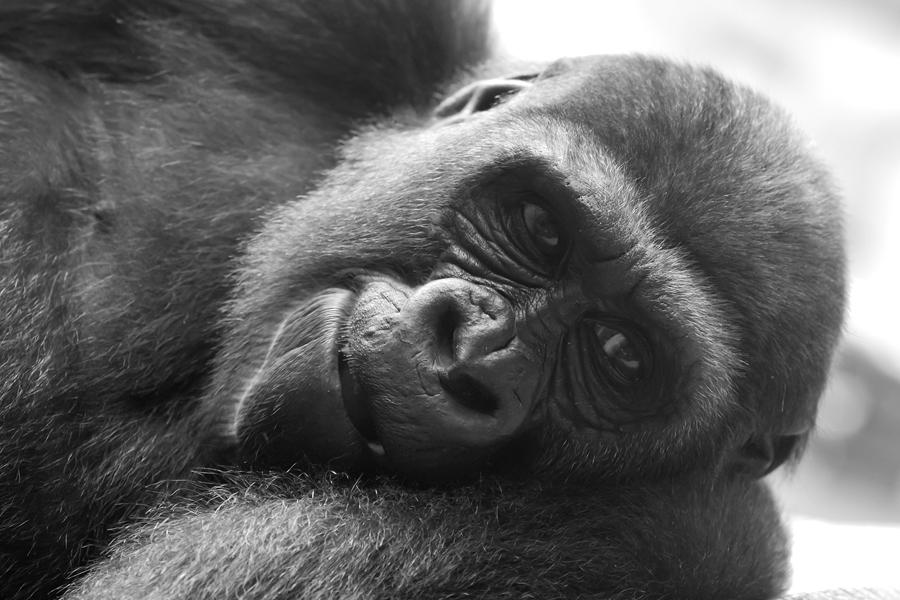IMAGE: http://www.michaelangstphotography.ch/wp-content/uploads/2011/07/Zoo-Z%C3%BCrich7.jpg